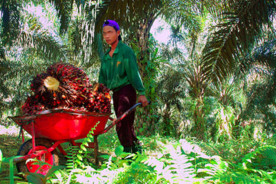 Palm oil company promises to improve schools after child labour probe