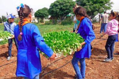 Syrian schools turn playgrounds into vegetable gardens to help children eat healthily